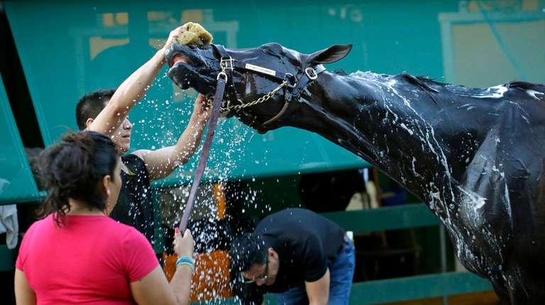Kentucky Derby winner and Preakness Stakes betting favorite