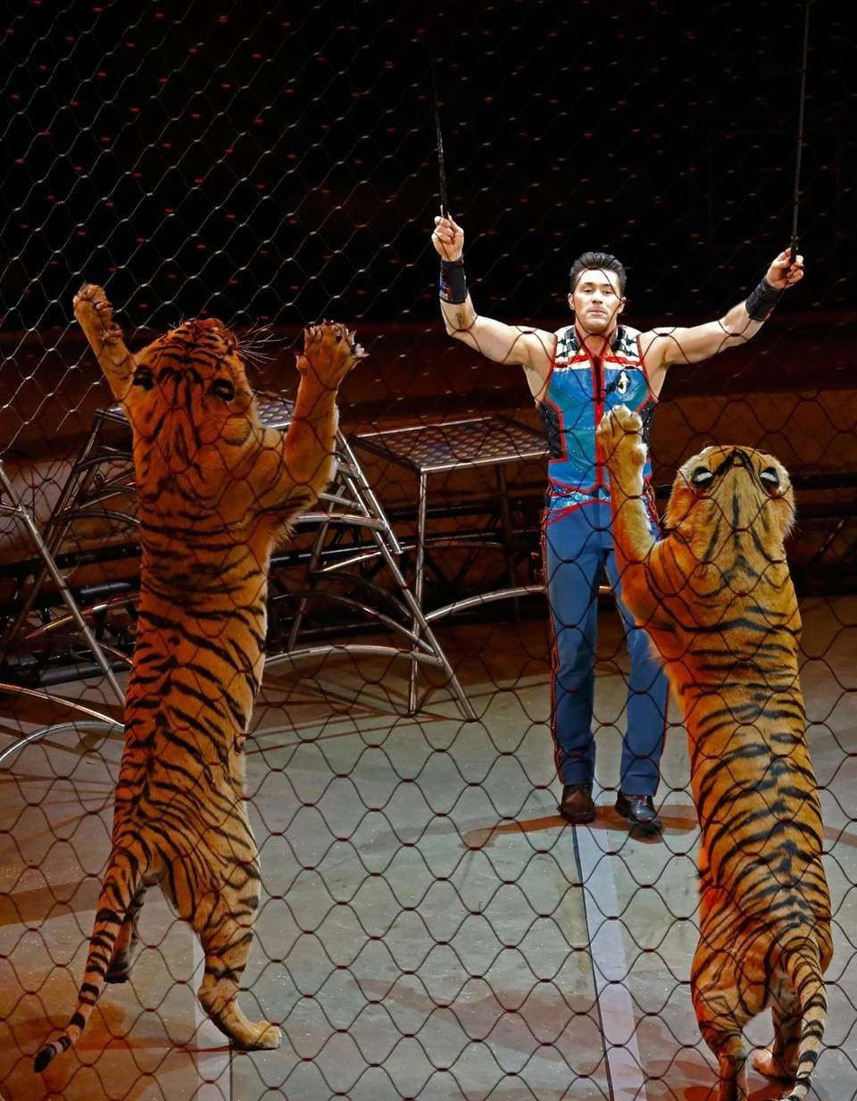epa05979864 Animal trainer Alexander Lacey performs with tigers