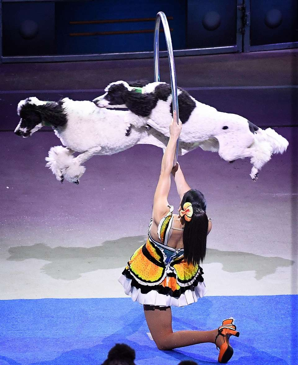 Scenes from the final performance of Ringling Bros.