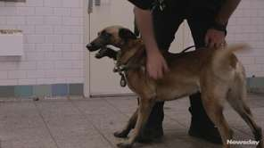 NYPD Transit Bureau K-9 Officer Thomas Regnier provided