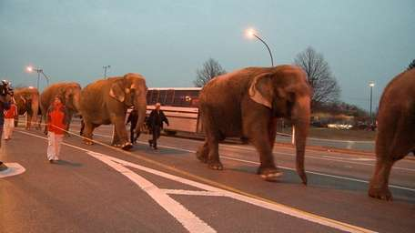 Ringling Bros. and Bamum & Bailey circus elephants