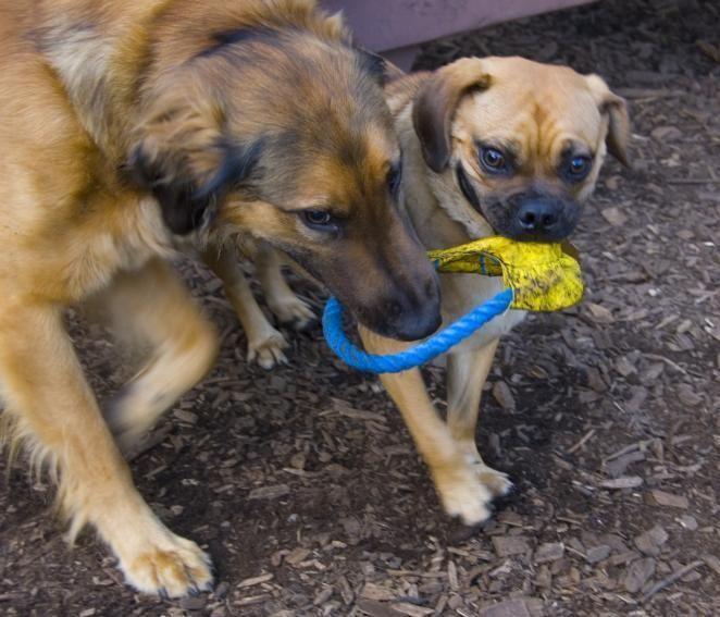 ROSLYN/EAST HILLS, Dog Park at East Hills Park,