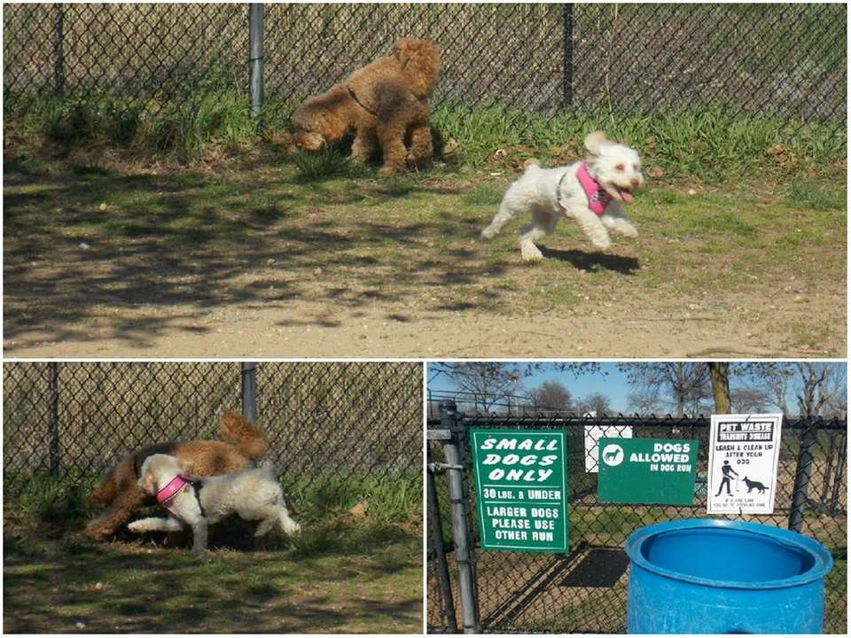 WANTAGH, Wantagh Park Dog Run, Kings Road, next