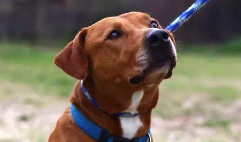AMAGANSETT, Napeague State Park, Route 27, 631-668-5000. Dogs