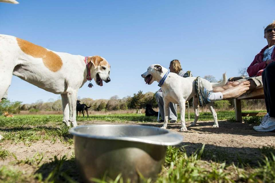 Dog Parks On Long Island Where Fido Can Run And Play