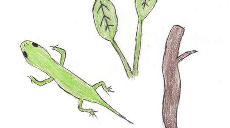 Anole lizards can change color to camouflage themselves.