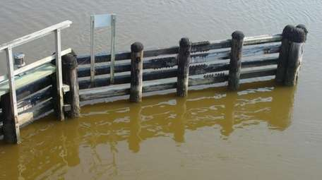 A picture of the brown tide at the