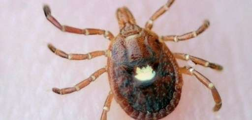 The Lone Star tick migrated to Long Island