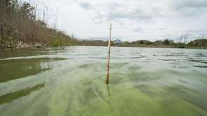 Algae is visible in the water at the