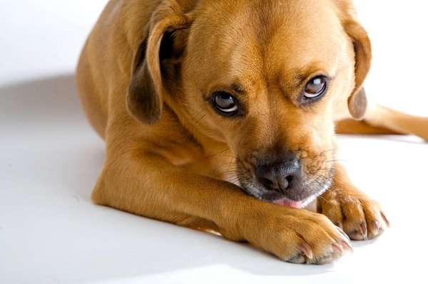 Treatments for hot spots caused by a dog