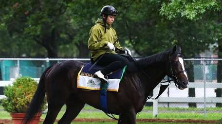 Belmont Stakes contender Epicharis walks outside his paddock