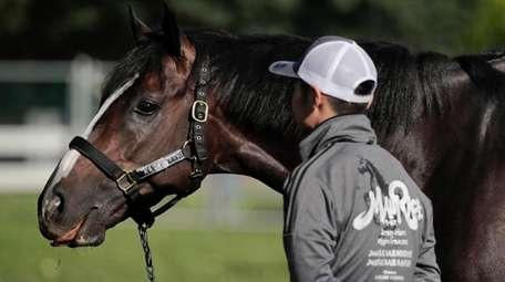 Belmont Stakes hopeful Epicharis pauses while grazing outside