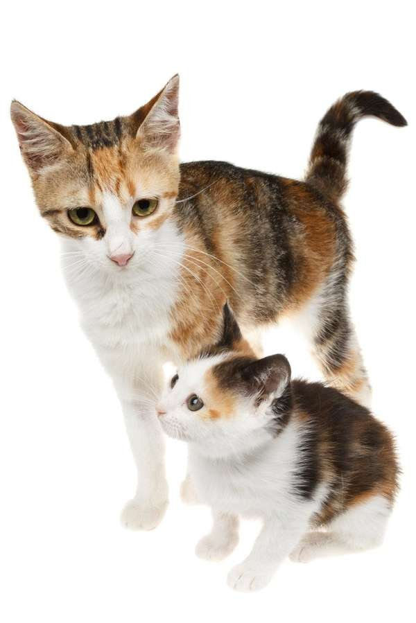 Cats as young as 4 months can produce