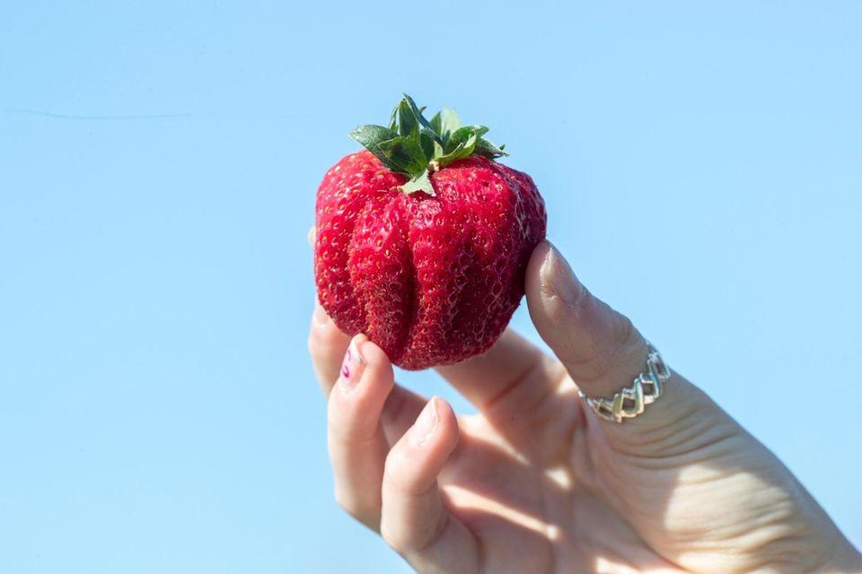 A ripe strawberry at the 63rd annual Mattituck