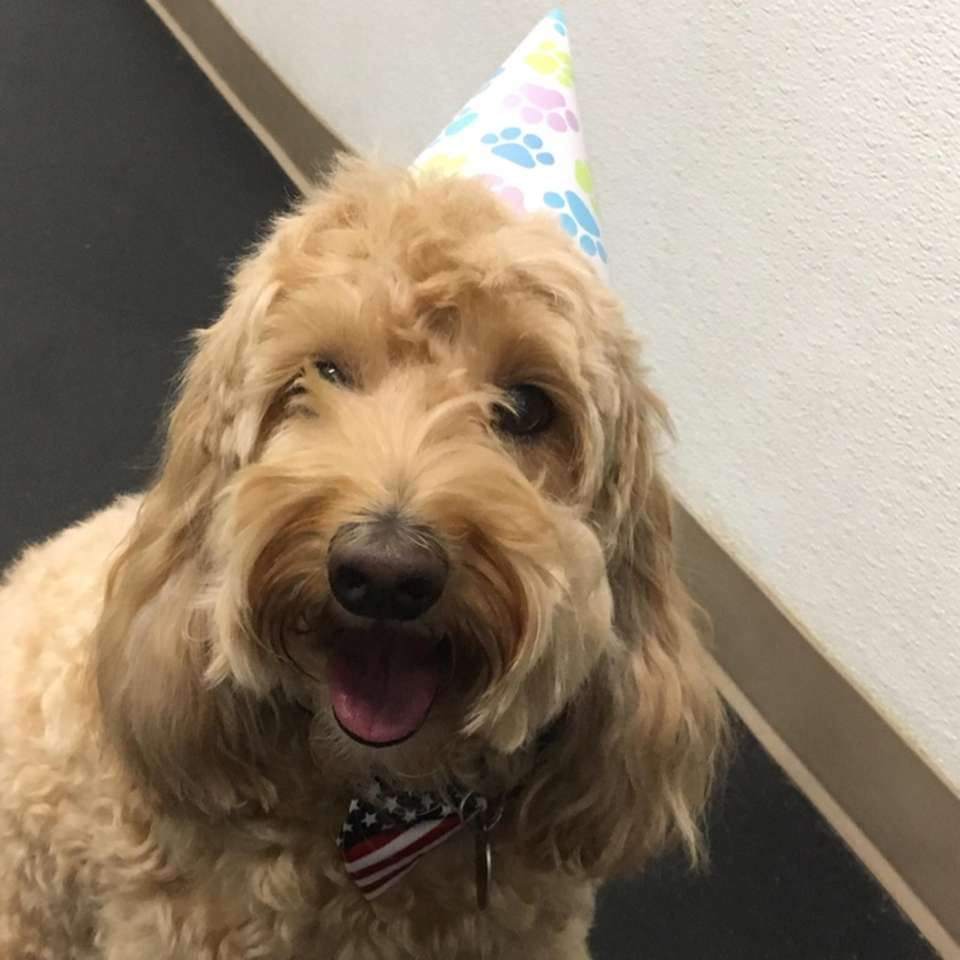Fozzie Lavitt shows off his bowtie and party