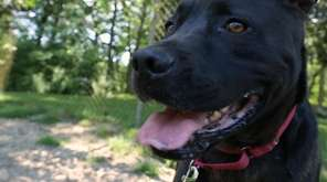 Jack is an energetic 5-year-old labrador mix. Jack
