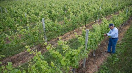 David Shanks, owner of Surrey Lane Vineyard Orchard