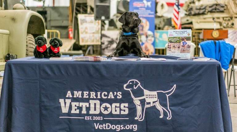 Charlie, from America's VetDogs, at the Old Bethpage