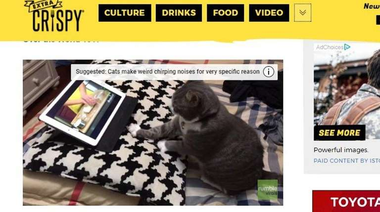 ExtraCrispy.com has videos, too, such as this cat