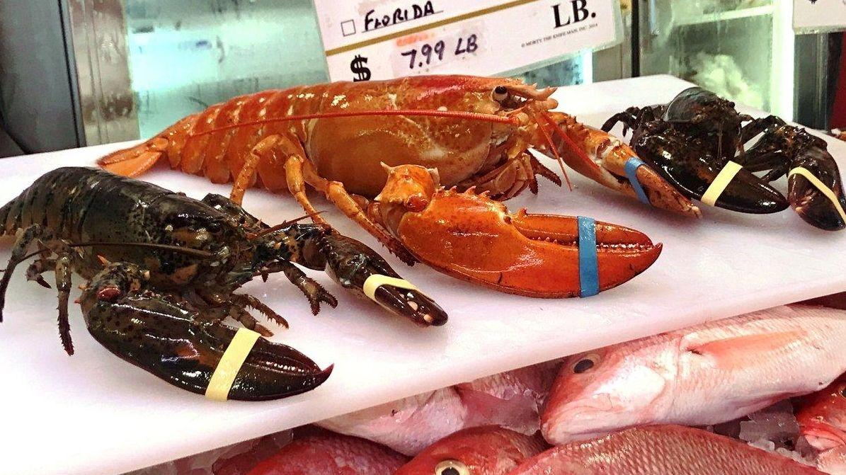 Rare red lobster surfaces at LI fish market