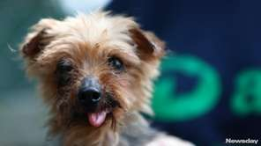 Dolittle was rescued from a puppy mill where