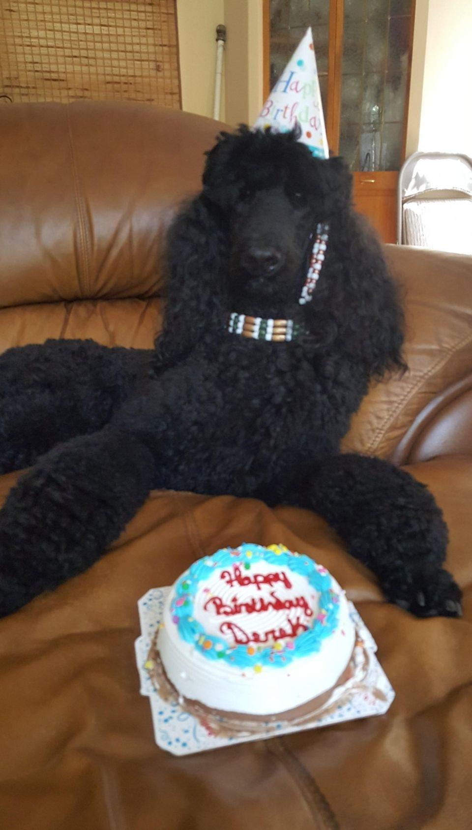 Derek McDreamy celebrating his 2nd birthday!