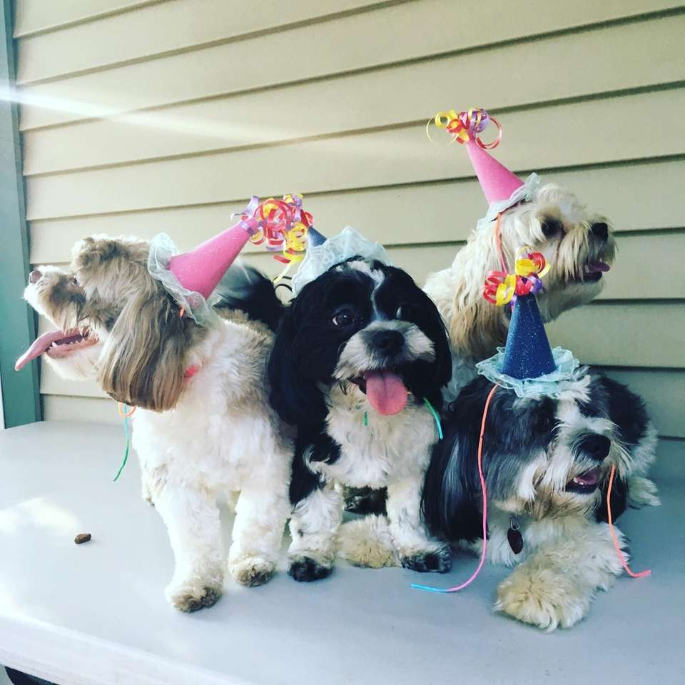 Puppies 1st birthday party (left to right: Lily,