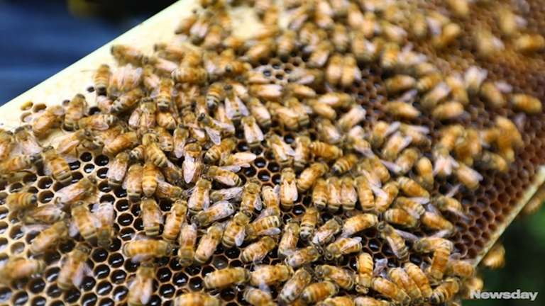Rich Blohm has been a beekeeper for more