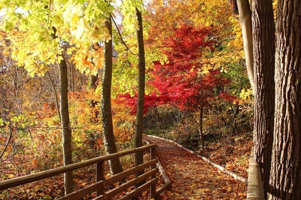 INFO: 200 Harbor Rd., Stony Brook; 631-689-0619, avalonparkandpreserve.org;
