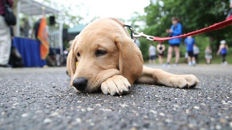 America's Vet Dogs, includingCharlie,the