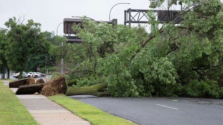 Trees fell onto the South Service Road of