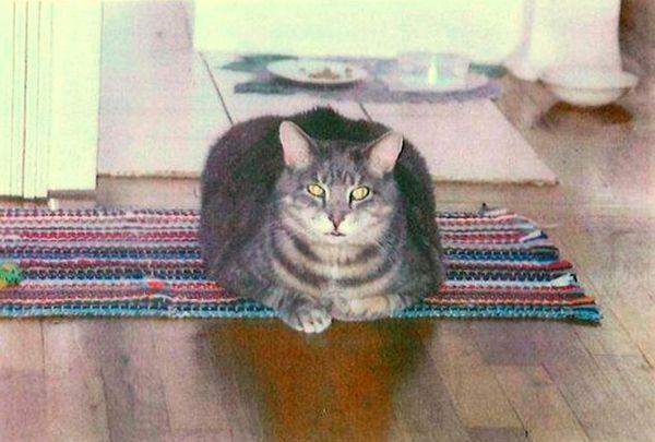 Puma, beloved pet of Celeste Targum of Albertson,