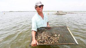 Oyster farmer Chuck Westfall of Amityville handles a