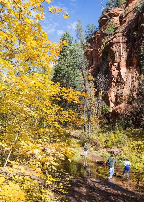 Sedona's West Fork Trail follows Oak Creek for