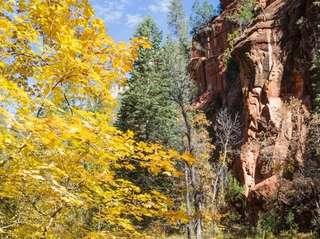 Sedona's West Fork Trail follows Oak Creek for