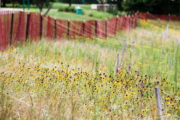 Native plant species growing behind Brookhaven Town Hall