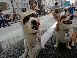 Dogs wearing sunglasses sit on a street in