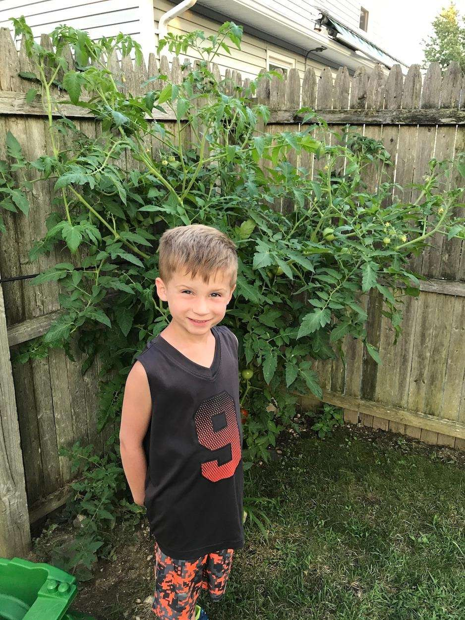 Connor Webster, 5, stands with his tomato plant
