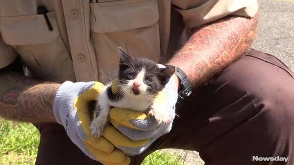 Suffolk County police rescued a kitten from a