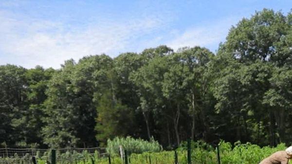 ELIJA Foundation's 6.3-acre farmland in Huntington, used as