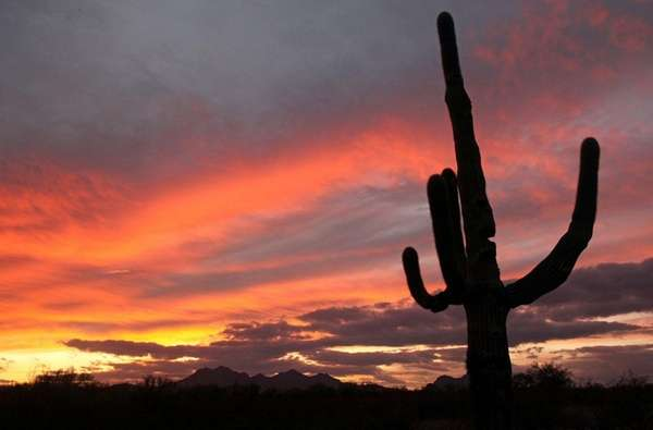 A cactus against a backdrop of colorful clouds