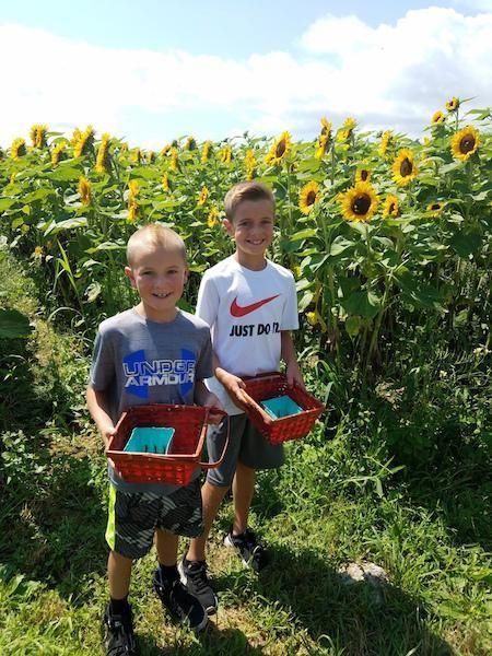 Owen and Logan Eriksen picking berries at Patty's