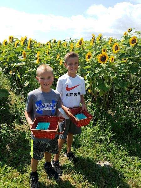 Owen and Logan Eriksen picking berries at Patty's