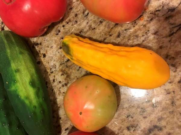 Therea Graff s yellow cucumber is probably a
