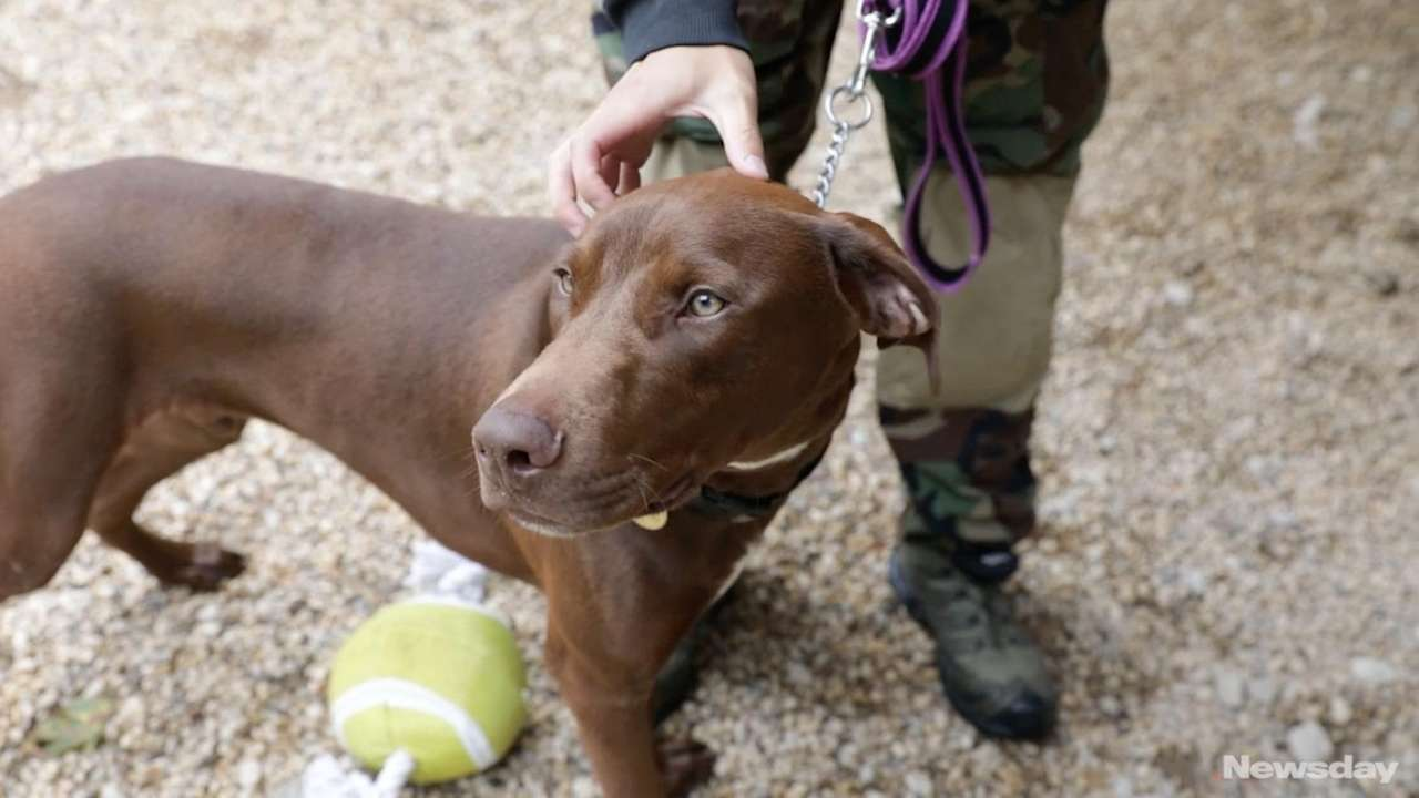 Jackson is an 8-month old doberman mix looking