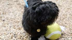 Monkey is a four year old terrier mix,