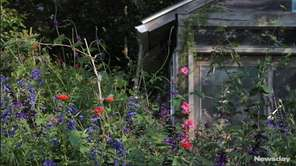 On Friday, a haven for hummingbirds that has