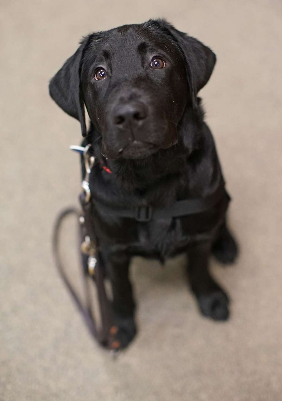 America's Vetdogs is home to Charlie, the adorable