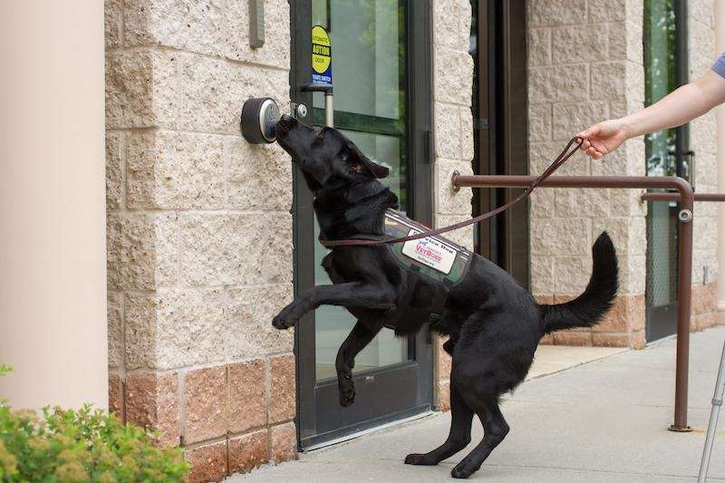 The Guide Dog Foundation and America's VetDogs offer