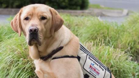 Caspar is a service dog who recently graduated